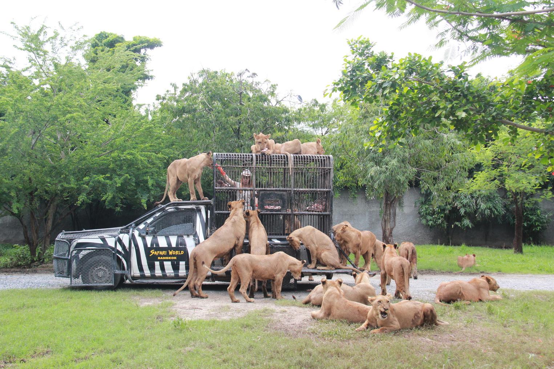 ไขข้อข้องใจ 1 วันกับบัตร safari world ราคาถูกทำอะไรได้บ้าง ?