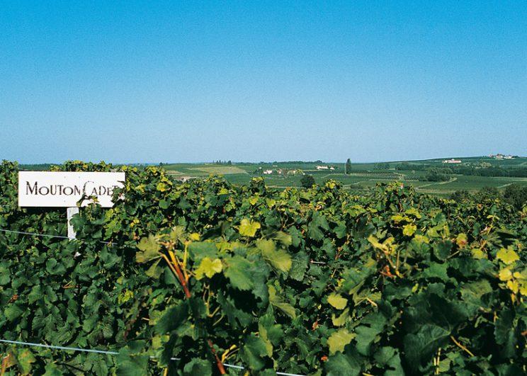 """เดอะ เซนต์ รีจิส กรุงเทพฯ แนะนำ  The Taste of Mouton Cadet """"มูตอง กาเดต์"""" ตำนานไวน์ฝรั่งเศสที่โด่งดังที่สุดของบอร์กโดซ์ ณ ดิแคนเตอร์ ในวันที่ 18 มกราคม 2562  เวลา 19.00น. – 21.00น."""