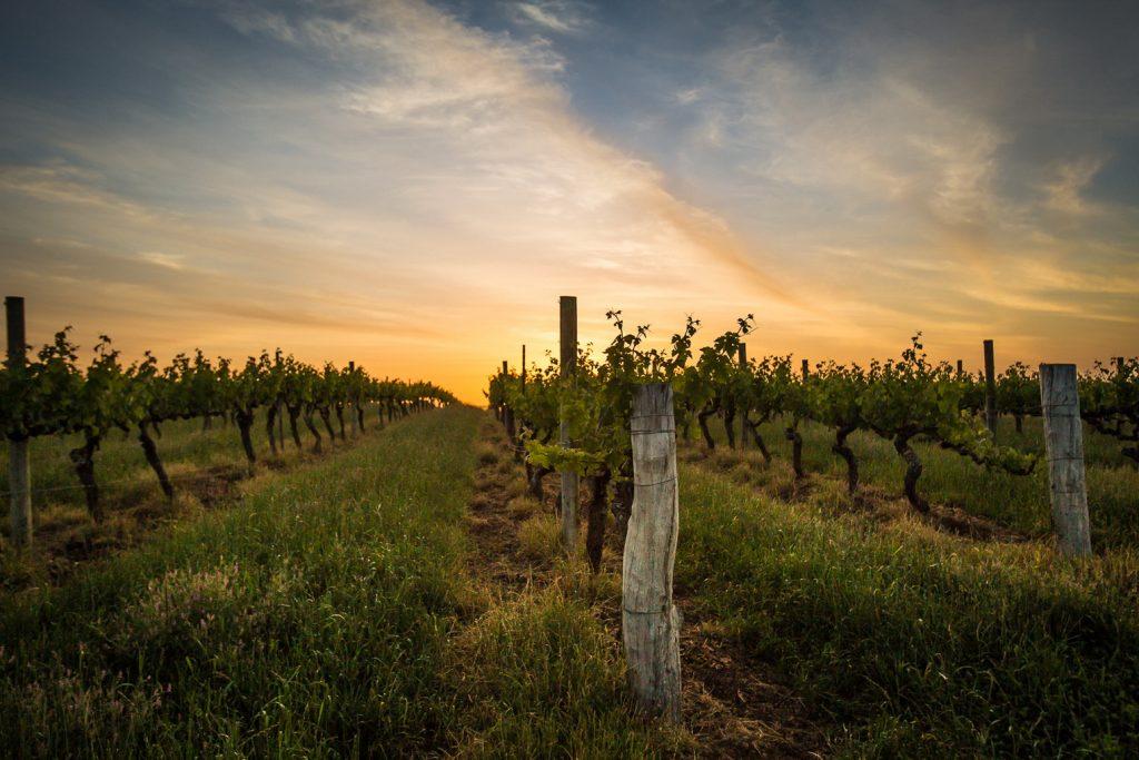เดอะ เซนต์ รีจิส กรุงเทพฯ ขอเชิญท่านร่วมเดินทางสู่ดินแดนแห่งไวน์ฝรั่งเศส ณ เมืองบอร์โด (Bordeaux) สัมผัสกับความหลากหลายของไวน์ มูตอง กาเดต์ (Mouton Cadet) ประเภทต่างๆ คัดสรรมาให้นักชิมถึงหกรายการ ดิแคนเตอร์ ในวันศุกร์ที่ 18 มกราคม 2562 เวลา 19.00น. – 21.00น. ณ ดิแคนเตอร์ ชั้น 12 โรงแรม เดอะ เซนต์ รีจิส กรุงเทพฯ Mouton Cadet เป็นที่รู้จักของคอไวน์ทั่วโลก ในฐานะไวน์ที่โด่งดังที่สุดของบอร์กโดซ์ เอโอซี (Appellation Bordeaux Controlee) เปิดตัวในปี 1930 โดยบาฮรองเนส ฟีลีปปิน เดอ รอธส์ไชลด์ (Baron Philippe de Rothschild) ทายาทที่ดูแลบริหารจัดการ มูตอง กาเดต์ ถูกผสมผสานให้มีรสชาติที่นุ่มนวล และสดชื่นขึ้น จึงทำให้ดื่มง่ายขึ้น พิถีพิถันตั้งแต่การคัดเลือกเก็บเกี่ยวองุ่นจนกระทั่งการหมักบ่ม สามารถดื่มกับอาหารได้หลากหลายขึ้น เพลิดเพลินไปกับการลิ้มลองไวน์รสเลิศ จิบไวน์ขาว ไวน์แดง โรเซ่ ทั้งหกชนิดของ Mouton Cadet Bordeaux และ Réserve Médoc ที่คัดสรรมาแล้ว เสิร์ฟควบคู่กันได้อย่างลงตัวกับชีสและอาหารทานเบ่นประเภทชากูเตอครีและอื่นๆ ราคา 1,500 ++ บาทต่อท่าน สอบถามข้อมูลเพิ่มเติมและสำรองที่นั่ง กรุณาติดต่อ โทร 02-207-7777 หรืออีเมล์ fb.bangkok@stregishotels.com เยี่ยมชมเว็บไซต์ได้ที่ www.stregisbangkok.com และติดต่อเราผ่านช่องทางอื่นๆได้ที่ Facebook Instagram และ Twitter เกี่ยวกับเดอะ เซนต์ รีจิส กรุงเทพฯ เปิดให้บริการตั้งแต่วันที่ 1 เมษายน 2554 เดอะ เซนต์ รีจิส กรุงเทพ สร้างสรรค์ผลงานอันยิ่งใหญ่และหรูหราด้วยแรงบันดาลใจจากนวัตรกรรมแห่งการเวลา เดอะ เซนต์ รีจิส กรุงเทพฯ ตั้งอยู่ ณ ถนนราชดำริ อยู่ใจกลางเมืองท่ามกลางอาคารสำนักงานของบริษัทระดับโลก ห้างสรรพสินค้าชั้นนำ และสวนลุมพินีอันร่มรื่นเขียวขจี ประกอบด้วย ห้องพัก 229 ห้อง รวมทั้งห้องสวีท 51 ห้อง และห้องชุดพักอาศัย 53 ห้อง พร้อมเซนต์ รีจิส บัทเลอร์ ที่คอยรับบริการแขกผู้มาเยือนทุกเวลาด้วยใจ ดื่มด่ำประสบการณ์กับห้องอาหารและบาร์ ห้องอาหาร วูว์ ที่นำเสนอความยอดเยี่ยมของอาหารนานาชาติประเภท กริลล์ ดื่มด่ำกับทัศนียภาพของกรุงเทพฯ โจโจ ต้อนรับนักชิมด้วยความอร่อยตามต้นตำรับอาหารอิตาเลียน เดอะ ดรอว์อิ้ง รูม ฉลองการจิบน้ำชายามบ่าย และ ดิแคนเตอร์ ดื่มด่ำไปกับไวน์บาร์ เดอะ เซนต์ รีจิส กรุงเทพฯ ขอแนะนำ เอเลมิส สปา แห่งแรกในประเทศไทย และ เป็นแบรนด์ที่โด่